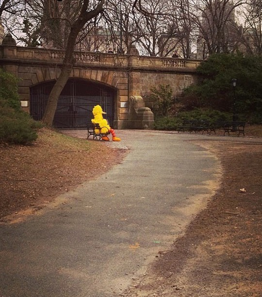 funny-big-bird-alone-park